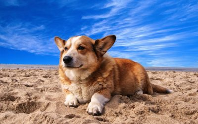 Teach Your Dog to Calm Down with These 3 Tips
