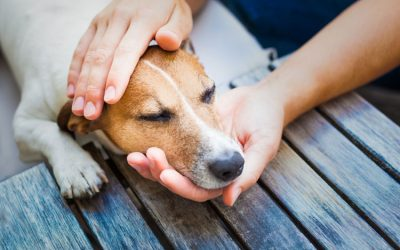 Why It Is Important to Practice Handling Your Dog