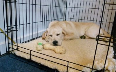 All About Crate Training